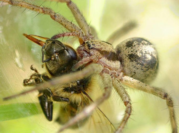 Spider bee2sharp