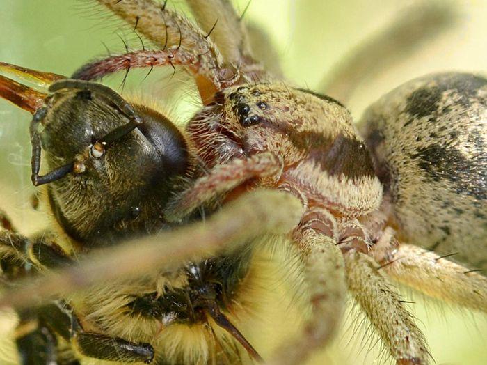 Spider bee3